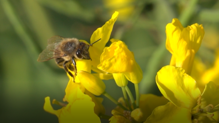 Survey for beekeepers under the DEMETER project